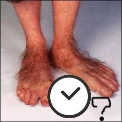 Combien de temps était nécessaire pour poser les prothèses des pieds des Hobbits ?