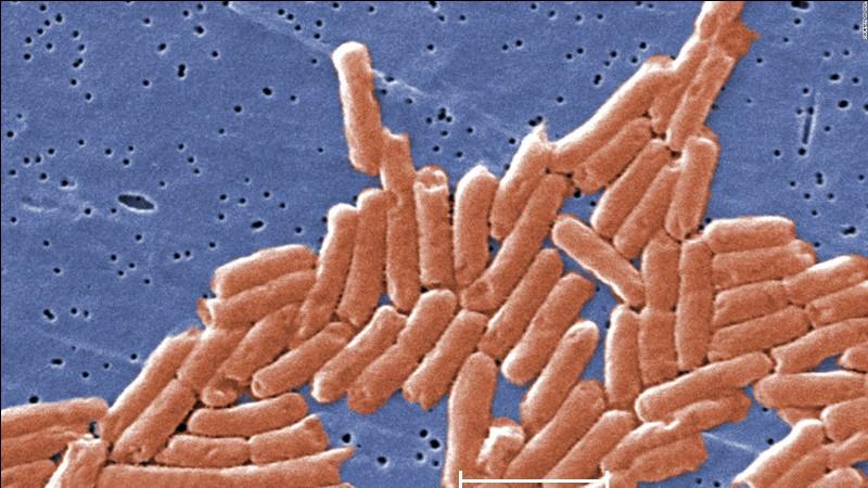Ce microbe est :