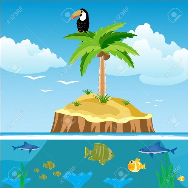Qu'emporterais-tu sur une île déserte ?