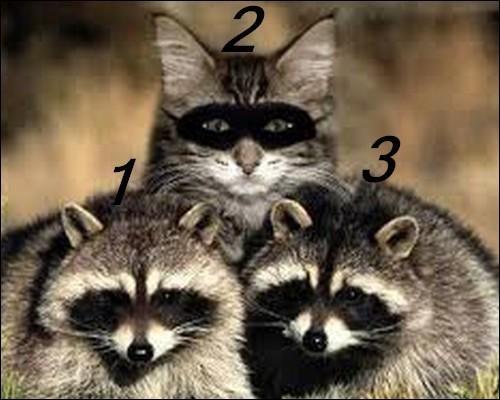 Quel est l'intrus ? (2)
