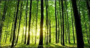 Elle s'approche de lui, lui ______ la main, et l'emmène dans la forêt la plus proche.