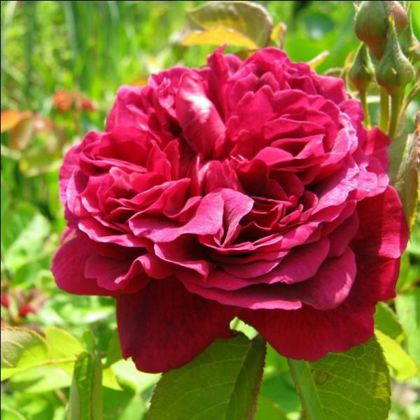 """""""Qu'y a-t-il dans un nom ? Ce que nous appelons rose, Par n'importe quel autre nom sentirait aussi bon."""" C'est William Shakespeare qui a dit cette phrase. Vrai ou faux ?"""