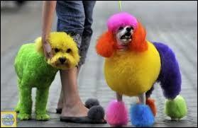 """[Arts plastiques] Désigner la couleur ne rentrant pas dans la catégorie des couleurs dites """"primaires"""" :"""