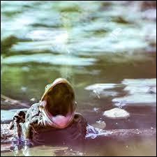 [Sciences naturelles] De ces animaux, désigner celui n'appartenant pas à l'ordre des amphibiens :