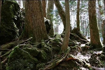 Quel est le surnom de la forêt Aokigahara ?