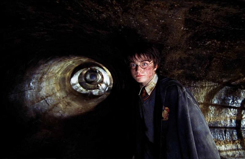 Un Harry un peu crasseux se promène là où il ne faut pas. Quel est l'animal caché ?