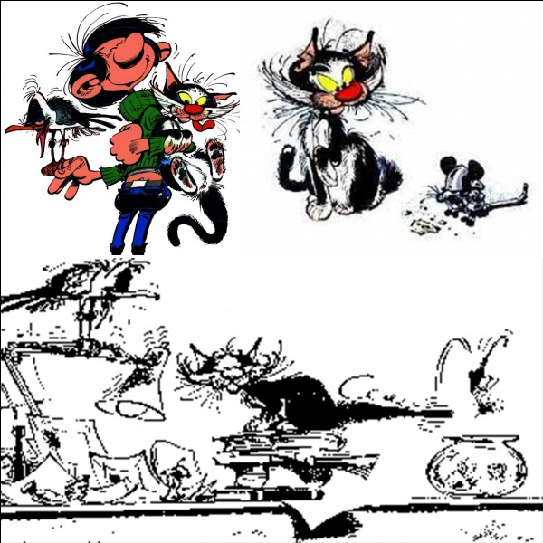 On sait que Gaston a plusieurs animaux « domestiques » comme sa mouette rieuse, son chat (qui porte le « doux » nom de « chat dingue »). D'autres animaux domestiques apparaissent plus épisodiquement.Sauriez-vous retrouver l'INTRUS, celui qui n'existe pas ?
