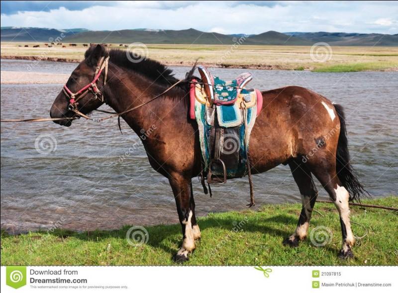 Sur un petit cheval mongol, j'ai chassé le loup avec :