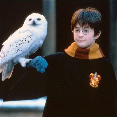 Comment s'appelle le hibou que Hagrid achète à Harry pour son anniversaire ?