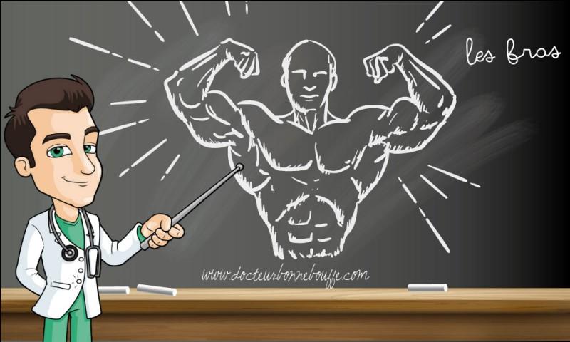 """R - L'avant-bras comporte deux os longs, le """"radius"""" et le cubitus."""