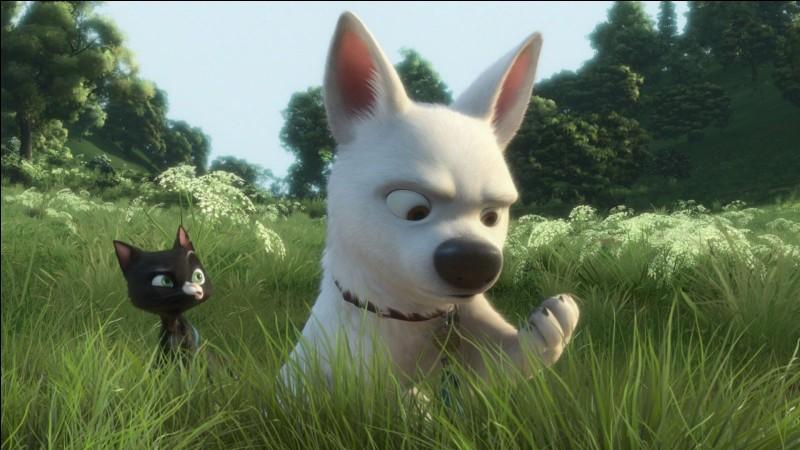 À ce moment du film, pourquoi Volt regarde-t-il sa patte ?