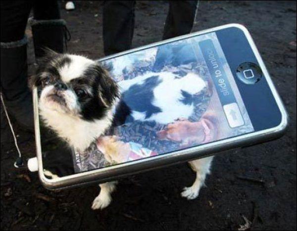 Et maintenant, voilà un chien déguisé en :