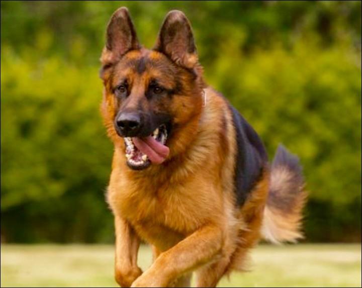 Avec ton chien, qui décide quand le jeu commence ?