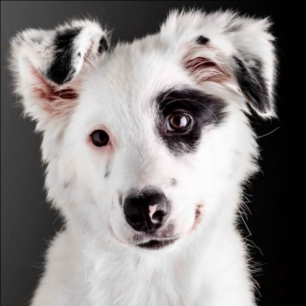 Comment savoir que ton chien te propose d'être son ami ?