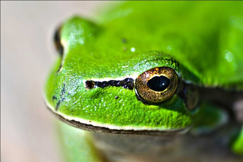 Je suis une grenouille et aussi le prince de :