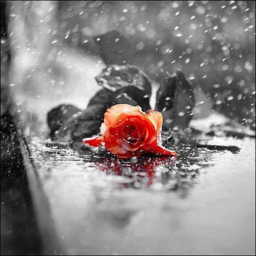 """Quant à lui, il chantait """"Pleurer pour qui pour quoi, pour quelques souvenirs, pour quelques mots d'amour jetés dans une cour et qui s'en vont mourir"""" :"""