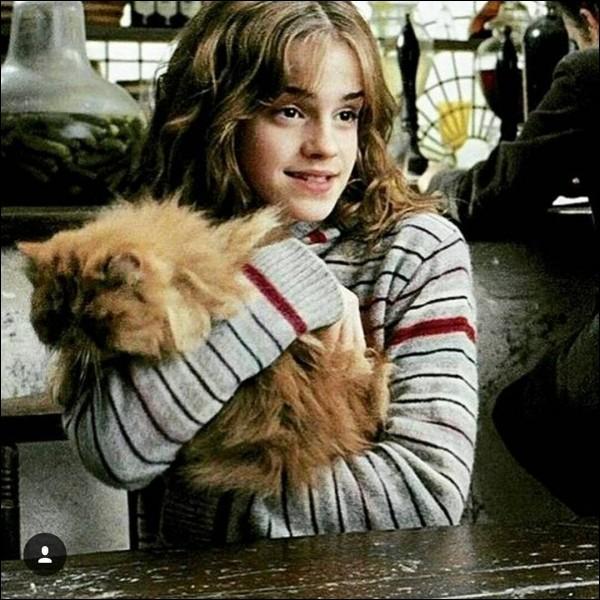 Avant de reprendre les cours en 1993, Hermione achète un chat. Quel est son nom ?