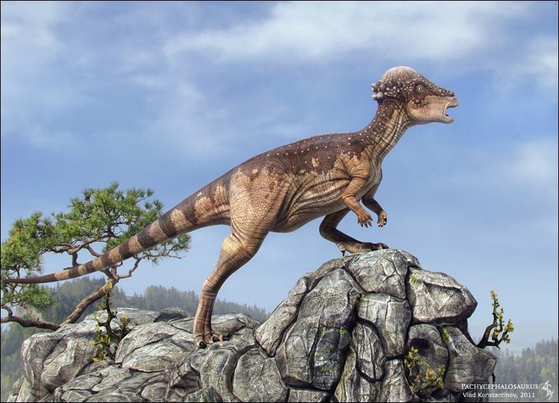 Quelle est la taille d'un Pachycephalosaurus ?