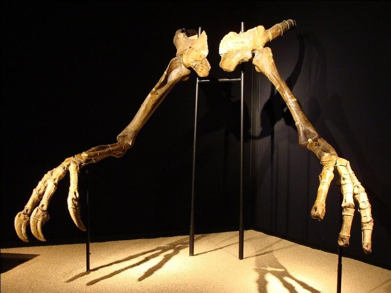 A quel dinosaure appartiennent ces bras ?