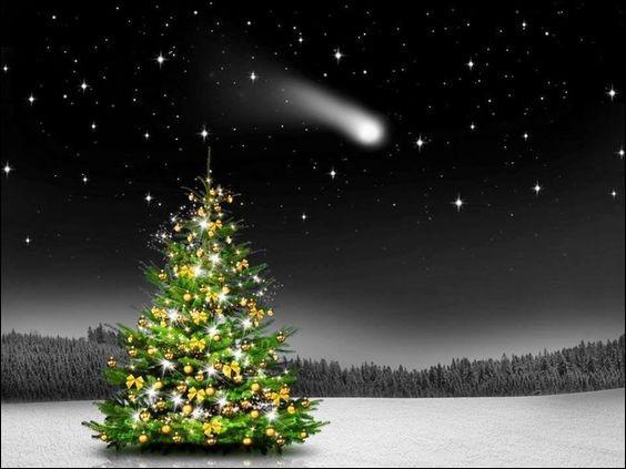 Et que dit le petit sapin de Noël mécontent de ses belles boules dorées ?