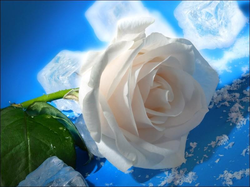 Quand le bateau s'en va, qui pense aux roses blanches de Corfou ?