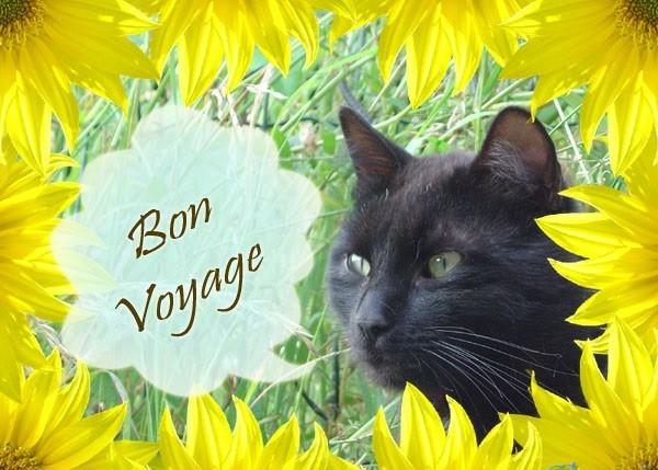 'Voyage, Voyage' en chansons