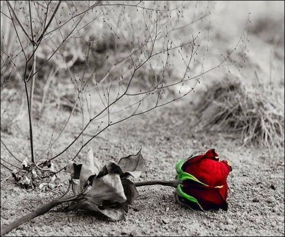 "À qui Cat Stevens rend-il un dernier hommage en posant une rose sur son cercueil, par les paroles de cette chanson ""I'll always be with you, this rose will never die, this rose will never die"" ? ( Je serai toujours près de toi, cette rose ne mourra jamais)"