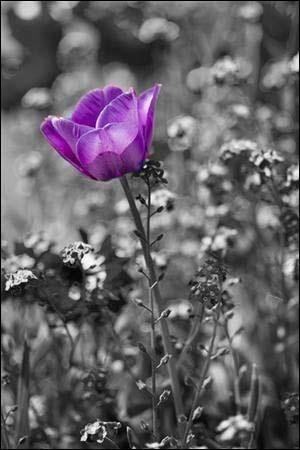 Quelle fleur était une fleur du mal dans le livre de Jörg Kastner dont l'action se situe en Hollande ?