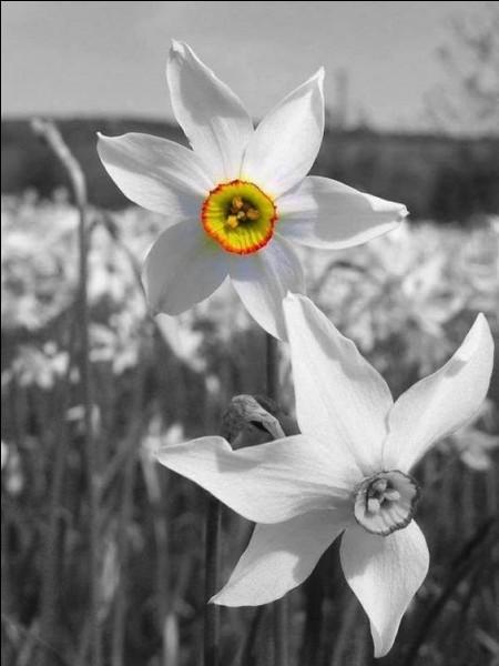 Que sont ces très jolies fleurs blanches qui fleurissent de mars à juin ?
