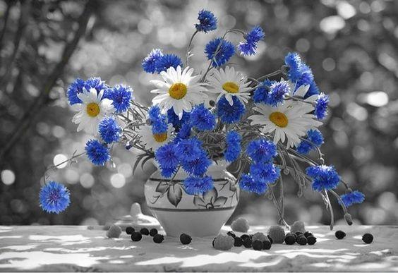 En culture générale, je vous fais une fleur !