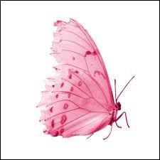 """Qui a chanté """"Papillon de lumière"""" ?"""