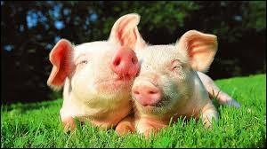 """Porcinet est le cochon dans """"Winnie l'ourson"""". Quel adjectif lui va le mieux ?"""