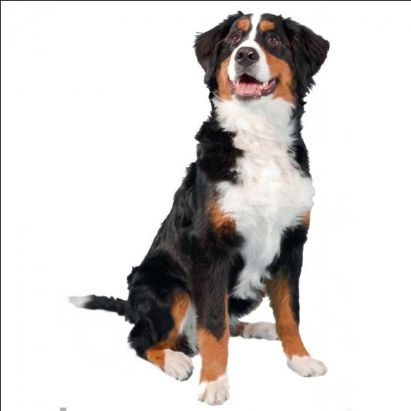 """Comment dit-on """"chien"""" en anglais ?"""