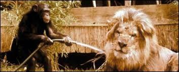 """Quel mot swahili signifiant """"docteur"""" est le titre d'une série des années 1960, racontant l'histoire de Clarence le lion et Judy la guenon ?"""