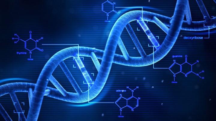 S.V.T - Technologie - Physique - Chimie - Mathématiques - Biologie (niveau 6eme)