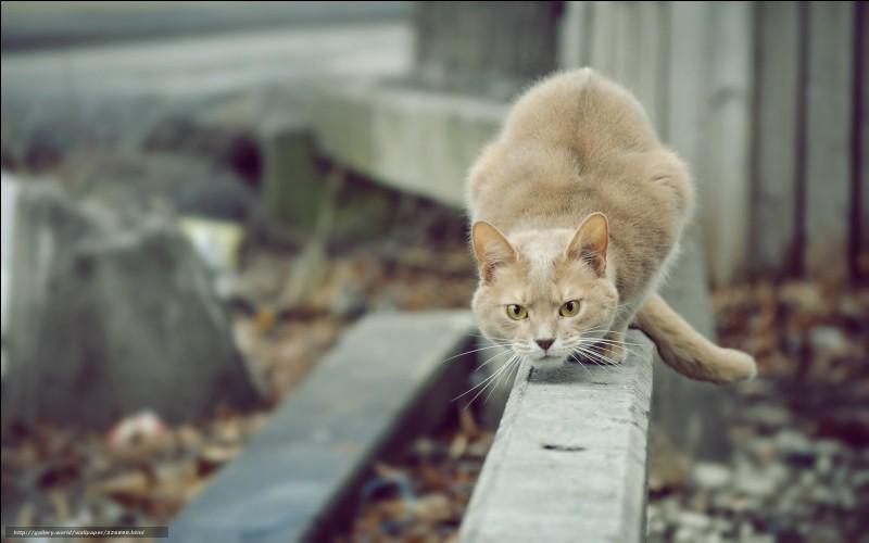 Tower est un chat ratier, c''est-à-dire qu'il était utilisé par une entreprise de dératisation pour éliminer les nuisibles et il était sûrement le meilleur employé de son entreprise car il a éliminé 28 899 souris tout au long de sa vie, de 1963 à 1987.