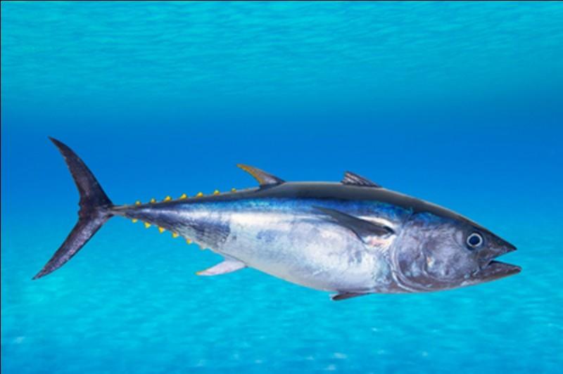 Mon premier est un poisson Mon deuxième est un poisson Mon troisième est un poisson Mon tout est un membre de la famille