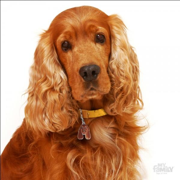 Quelle est la moyenne d'espérance de vie pour un chien de petite taille ?