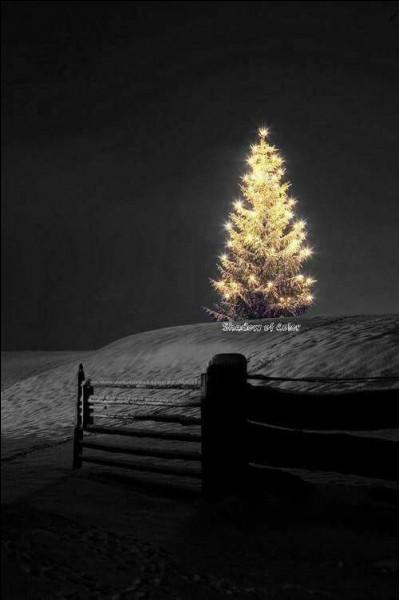 """Le sapin est de la fête ! Rappelons-nous ce chant de Noël : """"Mon beau sapin roi des forêts, que j'aime ta...."""""""