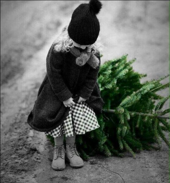 Noël est proche, a-t-on le droit de couper son sapin dans une forêt ?