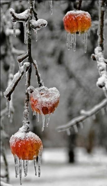 Avec quels fruits décorait-on les sapins en Alsace et dans les Vosges avant la grande sécheresse de 1850 ?