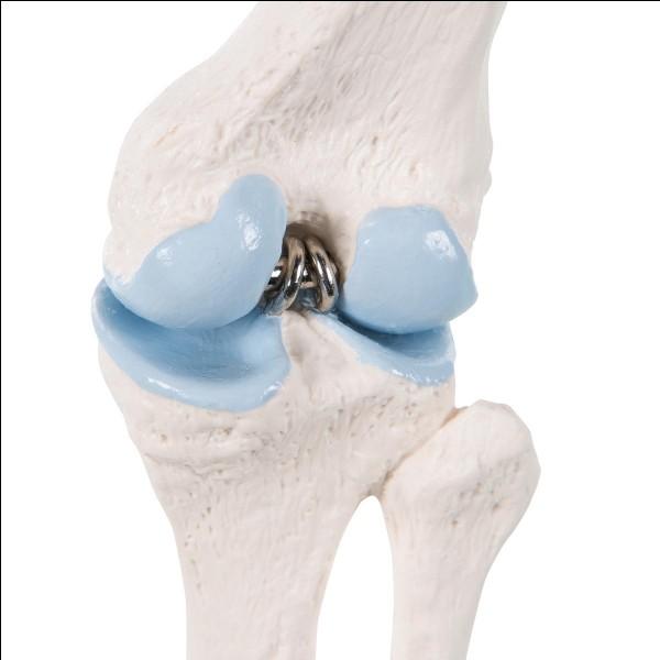Quelle est l'articulation du bras et celle de la jambe ?