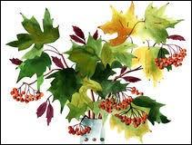 Très grand arbre d'Afrique tropicale, au bois rosé clair et à grain très fin, utilisé en menuiserie et ébénisterie : ma...