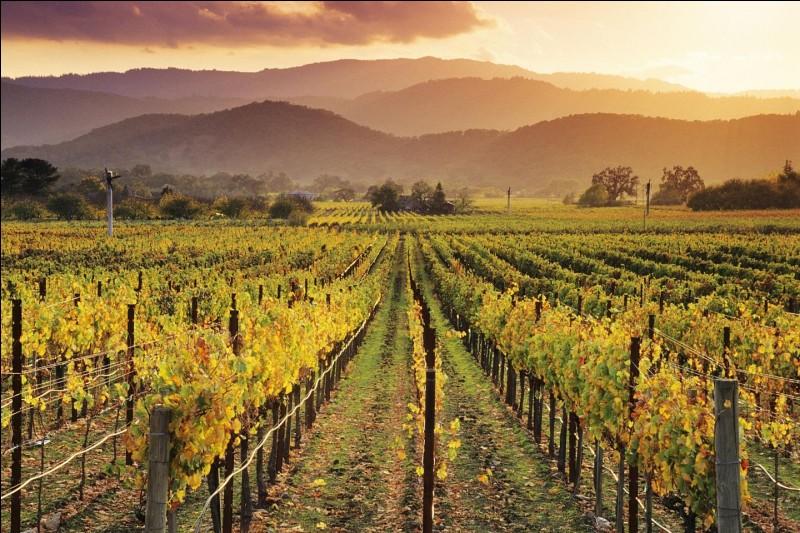 V comme vin. Quel est le premier pays producteur de vin hors d'Europe ?