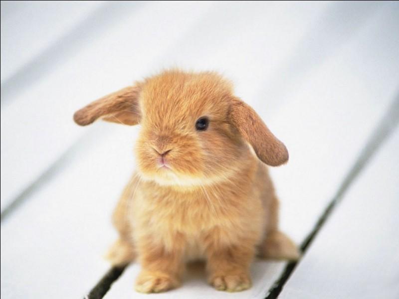 Quel est le nom du bébé lapin ?