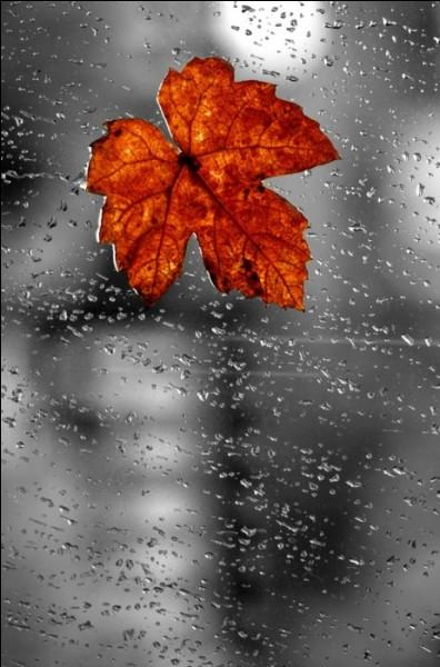 """De qui sont les paroles """"Rien que de l'eau, de l'eau de pluie, de l'eau de là-haut, et le soleil blanc sur ta peau..."""" ?"""