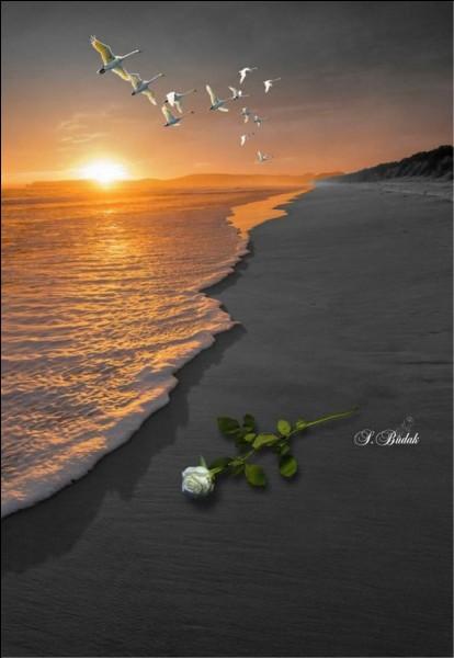 """À qui sont les paroles """"Vivre d'amour et d'eau fraîche, je rêve d'eau, mais d'océan. Ah l'océan ! Vivre la vie autrement"""" ?"""