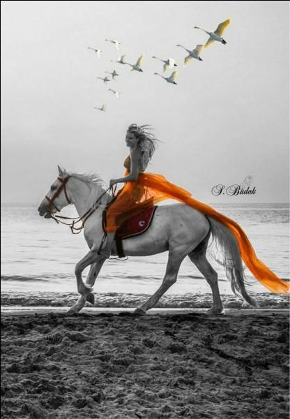 Quelle était la particularité du cheval Pégase ?