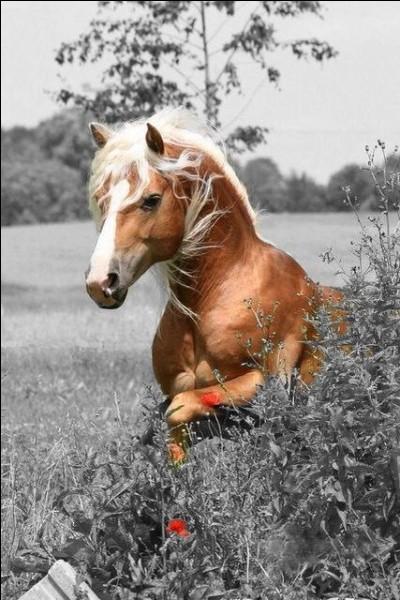 """Quel groupe décrivait les chevaux au galop dans leur chanson """"La chevauchée des champs de blé"""" ?"""