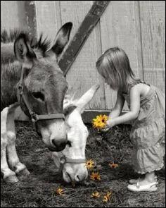"""Vous souvenez-vous du nom de l'âne dans """"les mémoires d'un âne"""" ?"""